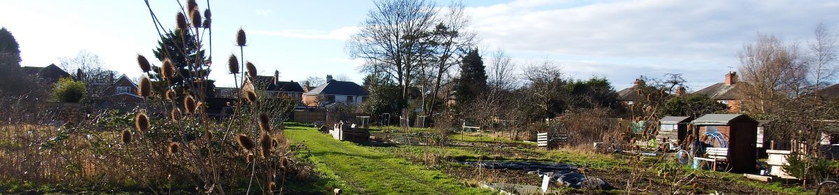 Lansdowne Allotments