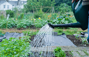 Watering your allotment